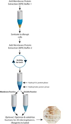 extraction and isolation of proteins Expt 2 lab report extraction and characterization of in the isolation or extraction of protein extraction and characterization of proteins.