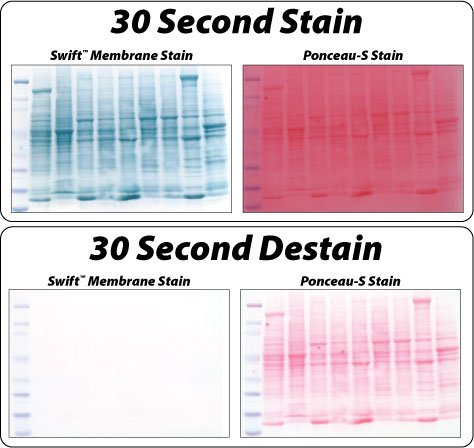 Swift Membrane Stain offers higher sensitivity compared to Ponceau S