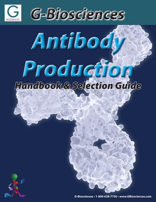 Keys to Antibody Production and Purification